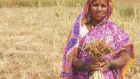 Una mujer india trabajando en el campo.