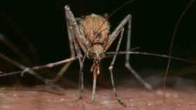 Por qué nos pican los mosquitos y cómo evitarlo