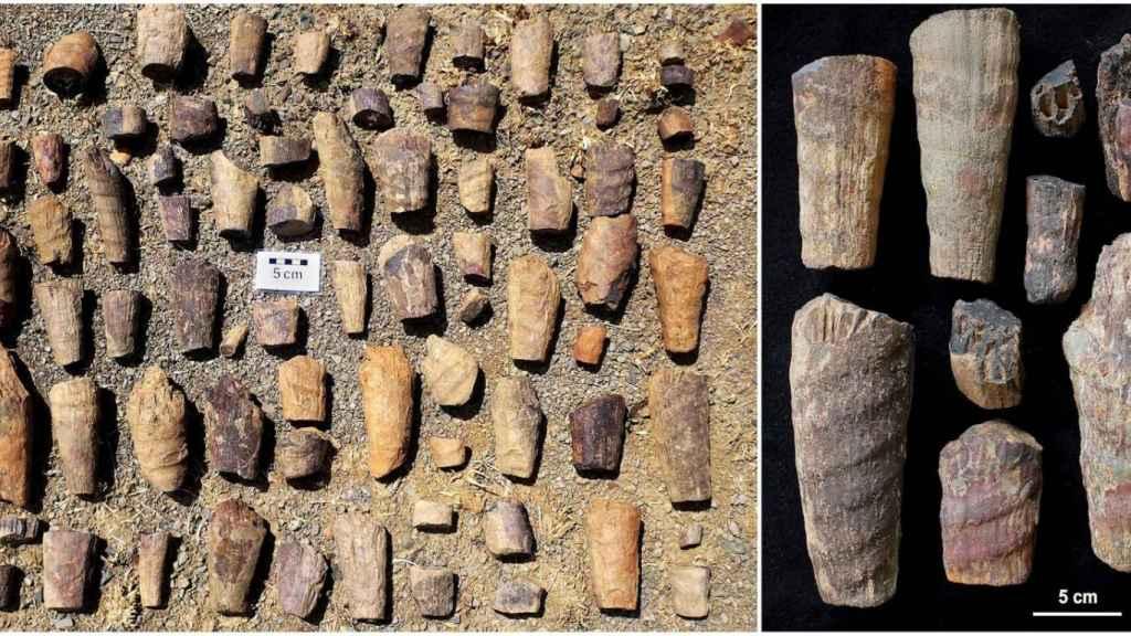 El fosil marino descubierto en Cabañeros.