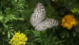butterfly-1644189 1920