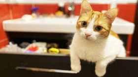 Día Internacional del gato 2020: celébralo con estos productos para él