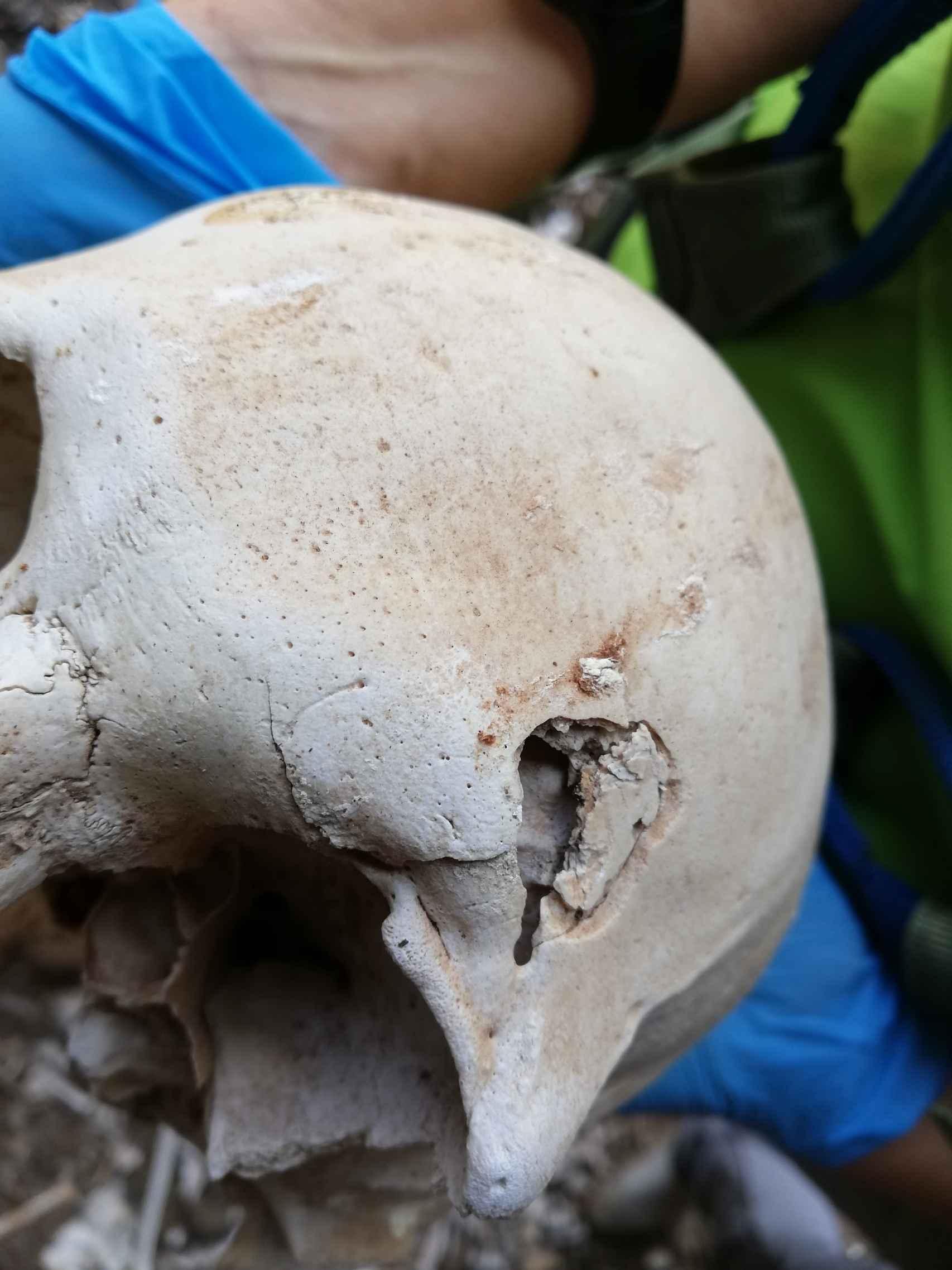 Un cráneo perteneciente a los restos óseos descubiertos el verano pasado en el enterramiento prehispánico ubicado en una cueva inaccesible del barranco de Guayadeque.