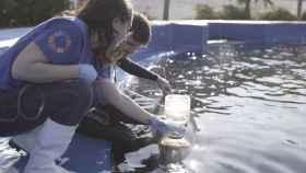 Una técnica pionera detecta enfermedades respiratorias en delfines de manera rápida, eficaz y no invasiva