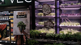 Las plantas vivas que Infarm vende en supermercados.