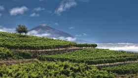 El Teide, dueño y señor del viñedo canario.