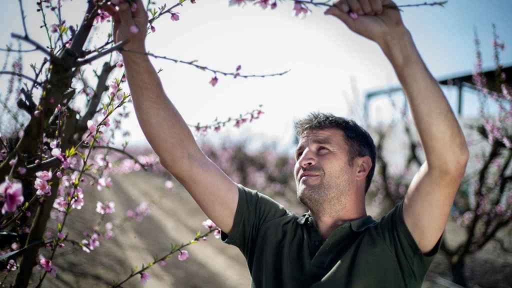 Chamorro durante su jornada de trabajo en su finca de Zurbarán, Badajoz.