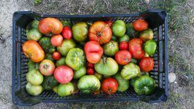 Una imagen de archivo de alimentos ecológicos.