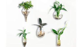 Qué son las plantas de aire o plantas sin tierra y algunos tipos