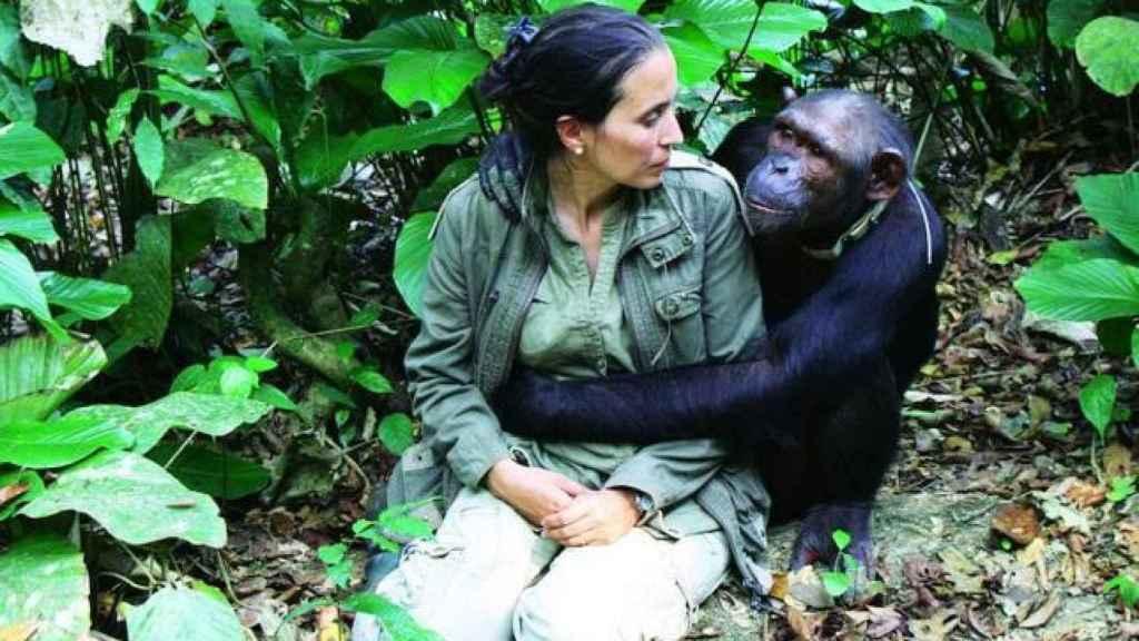La veterinaria es capaz de reconocer a todos los chimpancés con los que ha trabajado.