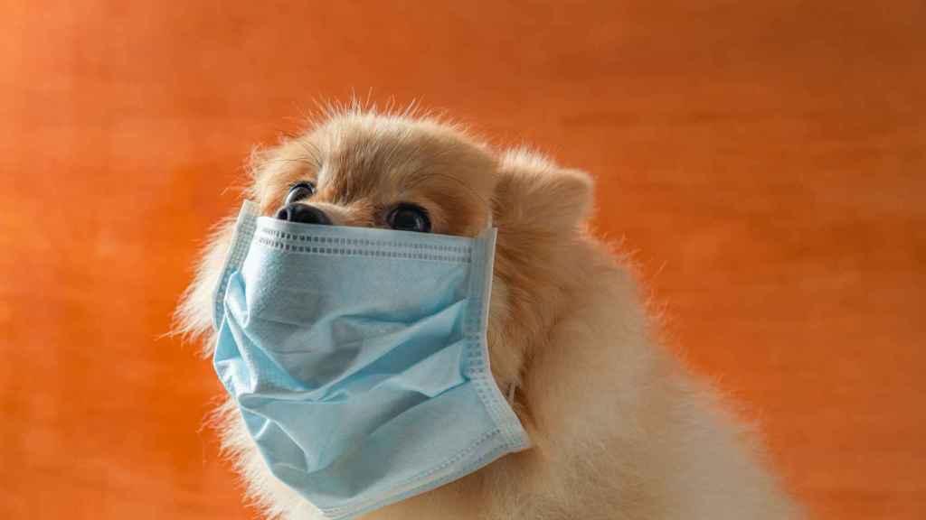 Los animales de compañía ¿Portadores del Coronavirus?
