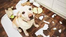 Cámara de vigilancia para perros: mira, habla y lanza premios