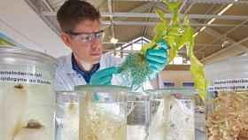 Científicos de Bayer Cropscience en uno de sus laboratorios.