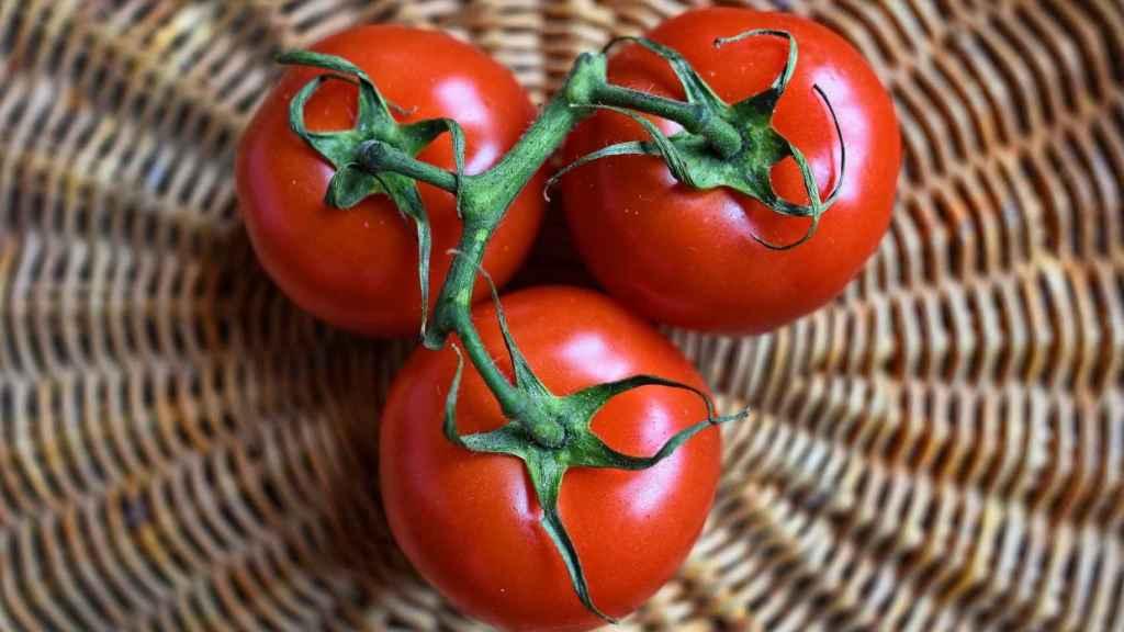 Tres tomates en rama.