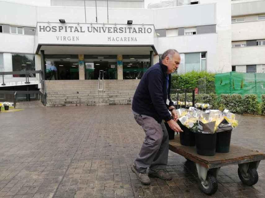 Un trabajador del hospital Macarena ayuda a colocar un cargamento de flores de regalo para su personal.