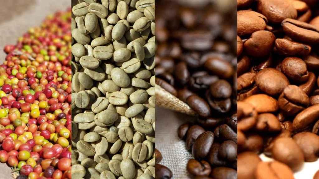 De izquierda a derecha: frutos de café, granos de café verde, tueste torrefacto y tueste medio.