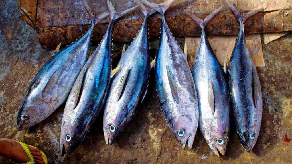 El atún es uno de los pescados más ricos en vitamina D.