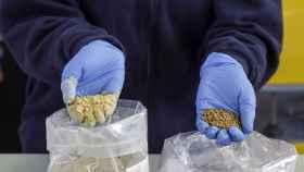 Material compuesto por residuos del aceite de oliva y un material termoplástico.