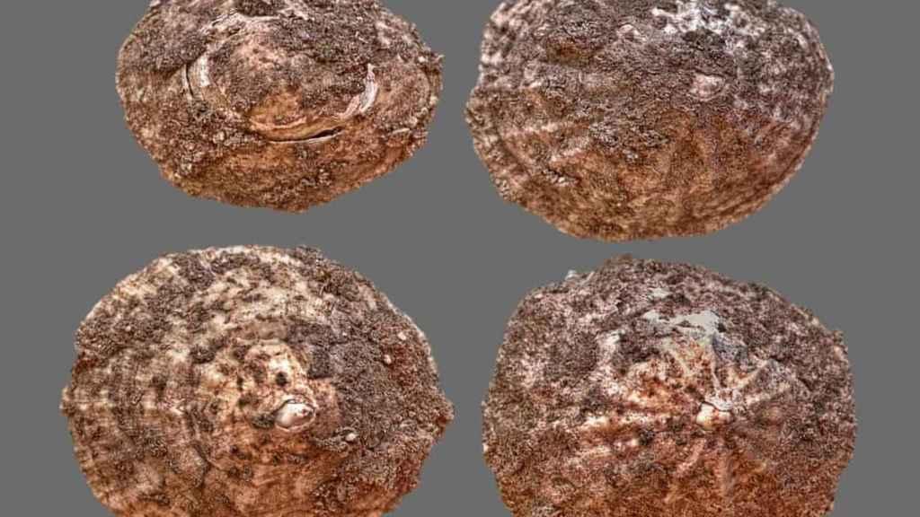 Conchas encontradas en la cueva donde se realizaba la excavación.