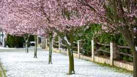 Nieve en primavera. EFE/EPA