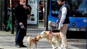 Dos hombres pasean a su perros en Madrid./