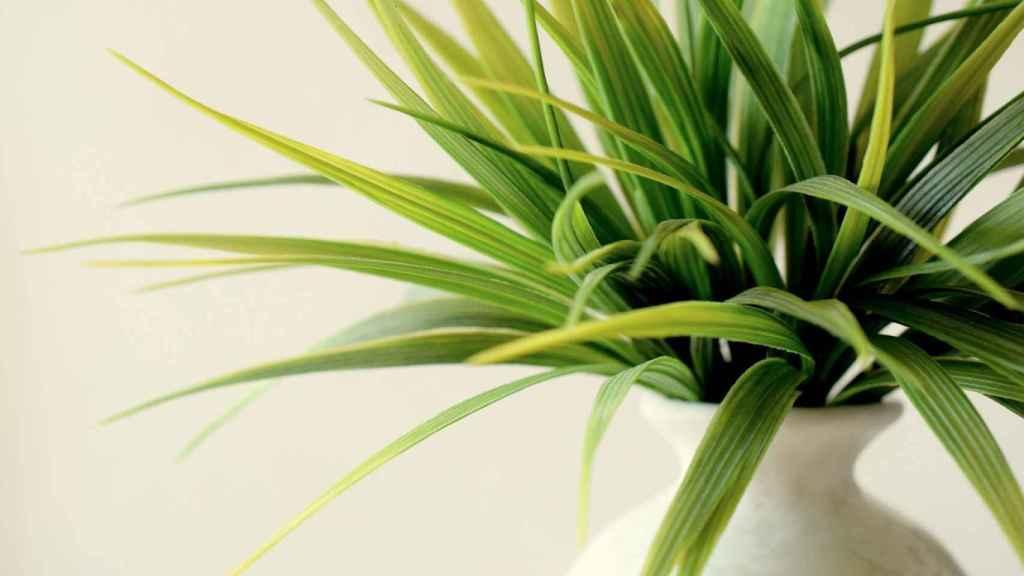 Los pasos a seguir para revivir una planta
