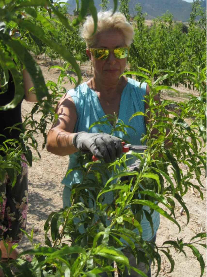 La agricultora Esperanza Ramírez, socio de la Cooperativa Thader de la localidad murciana de Cieza, trabajando.