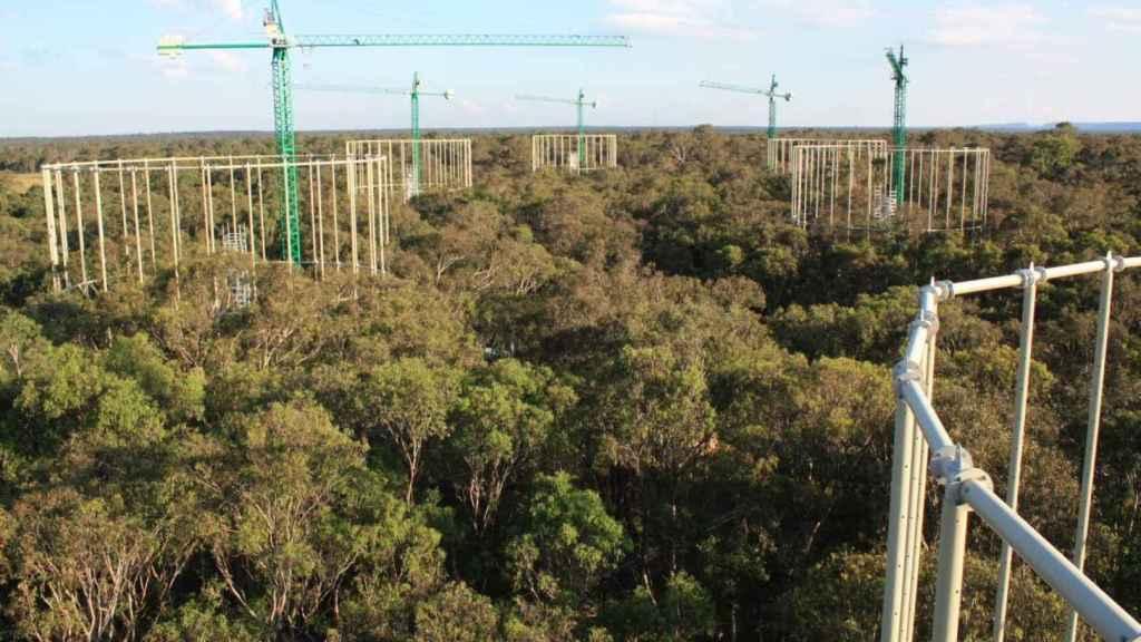 Vista aérea del experimento realizado en el bosque australiano.