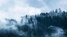 Una imagen de archivo de un bosque.