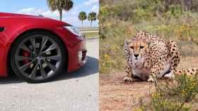 El nuevo modo de los Tesla se inspira en los leopardos