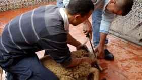 Imagen del sacrificio de un cordero.