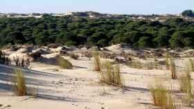 El Parque Nacional de Doñana.