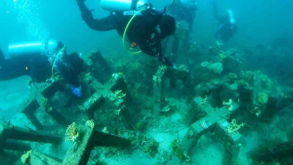 Arrecife artificial de Project CORaiL