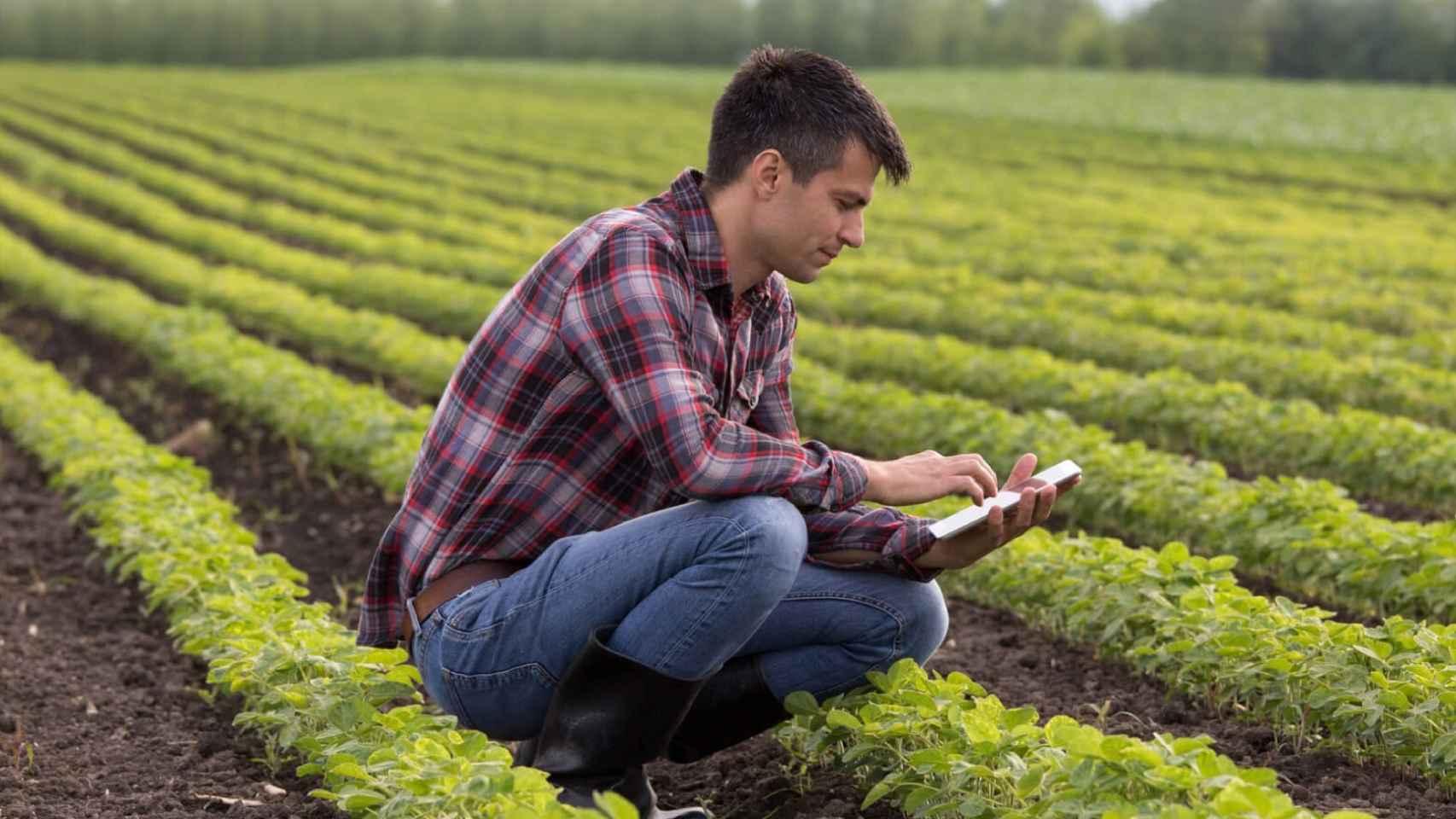 Estudio de cultivo