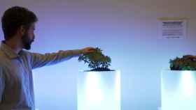 Bioo es una startup biotecnológica que obtiene energía a través de procesos naturales de las plantas.