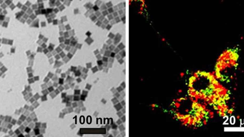 A la izquierda, imagen de nanocubos. A la derecha, imagen de células cancerosas en un cultivo.