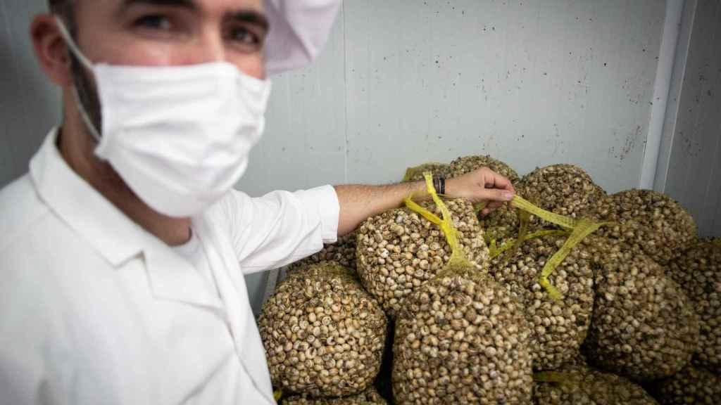 Manuel mostrando sacos de caracoles conservados en frío en los instantes previos a su distribución.