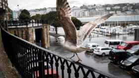 Una gaviota emprende el vuelo en San Sebastián.