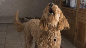 Mi perro no para de ladrar, ¿qué hago?