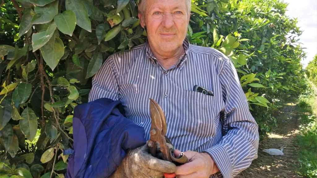 El veterano podador Antonio Aranda, de 60 años, en un naranjal de La Rinconada (Sevilla)