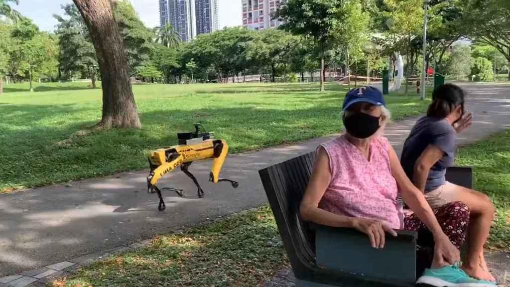 Los perros robóticos de Boston Dynamics andan por uno de los parques de Singapur