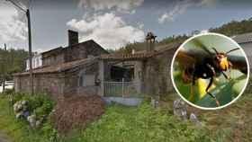 Una avispa velutina avistada en Santiago y Riboredo, la aldea gallega donde ocurrieron los hechos.