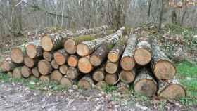 aprovechamientos de madera