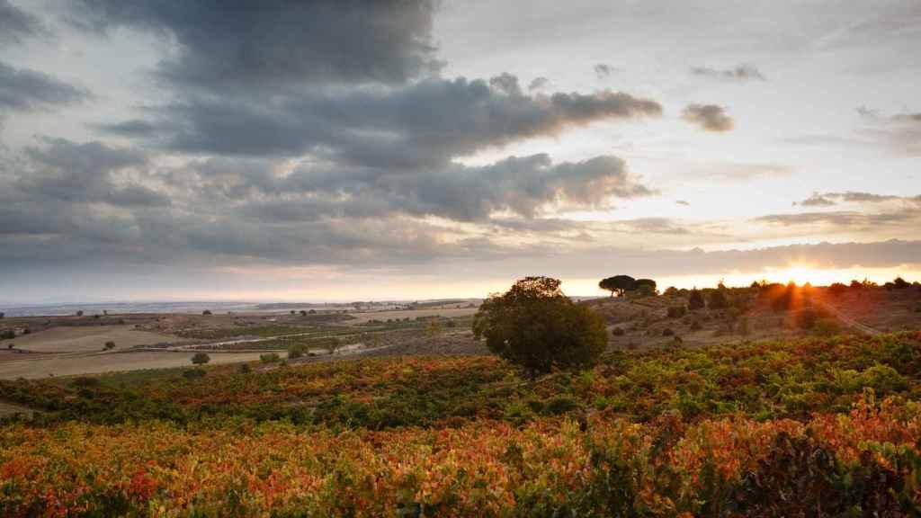 Viñedos de las Bodegas Viña Mayor (Ribera del Duero)