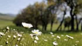 Tiempo de primavera. EFE.