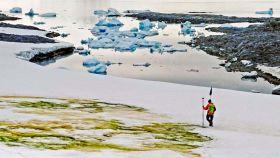 El autor principal del estudio Andrew Gray geoetiqueta las floraciones de algas nevadas.