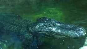 Una captura del vídeo compartido por el zoo de Moscú.