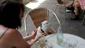 Un perro con mascarilla en una terraza de Barcelona.