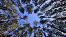 Imagen de varios árboles en el bosque.