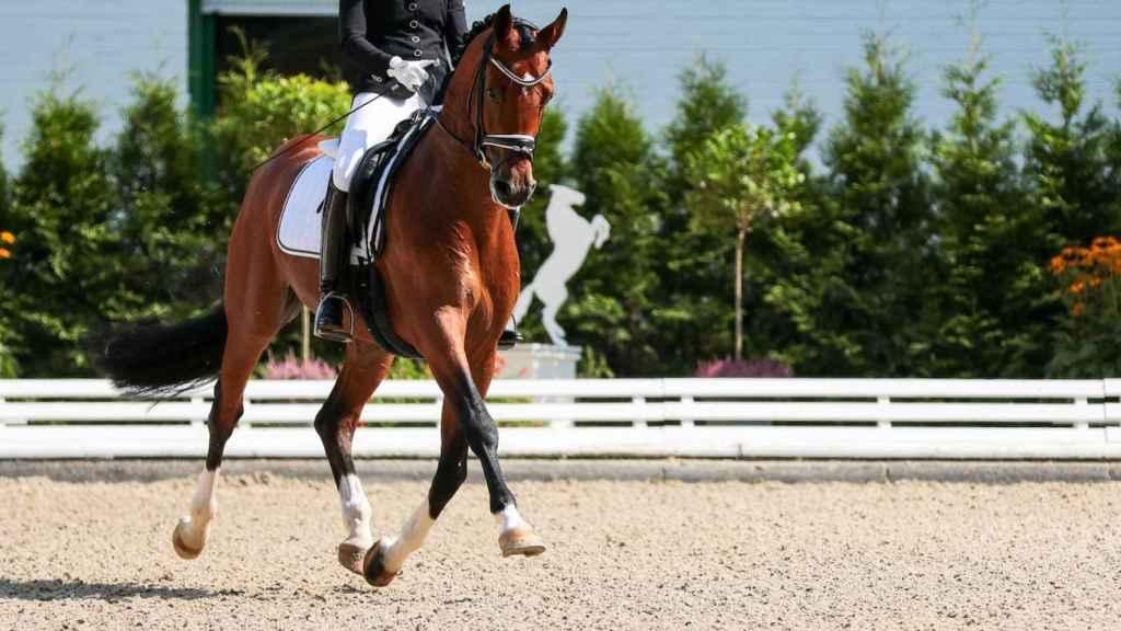 Fotografía de un caballo durante una competición ecuestre