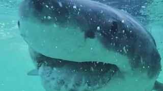 Un ataque de tiburón o un rayo: peligros más probables que un trombo por vacunarte